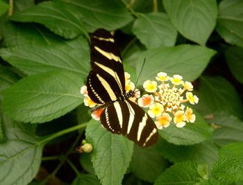 Schmetterlinge 89.jpg