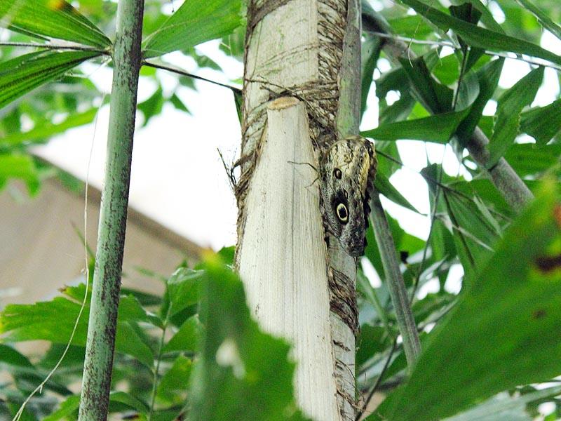 Schmetterlingshaus Jonsdorf Sachsen Bananenf