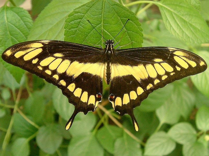 Schmetterlingshaus Jonsdorf Sachsen Koenigspage