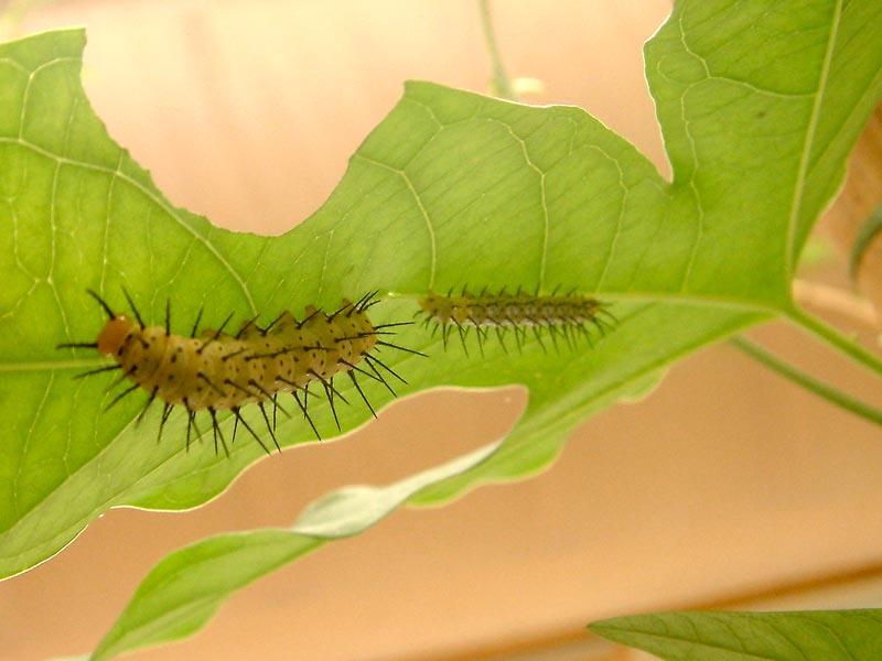 Schmetterlingshaus Jonsorf Sachsen 1