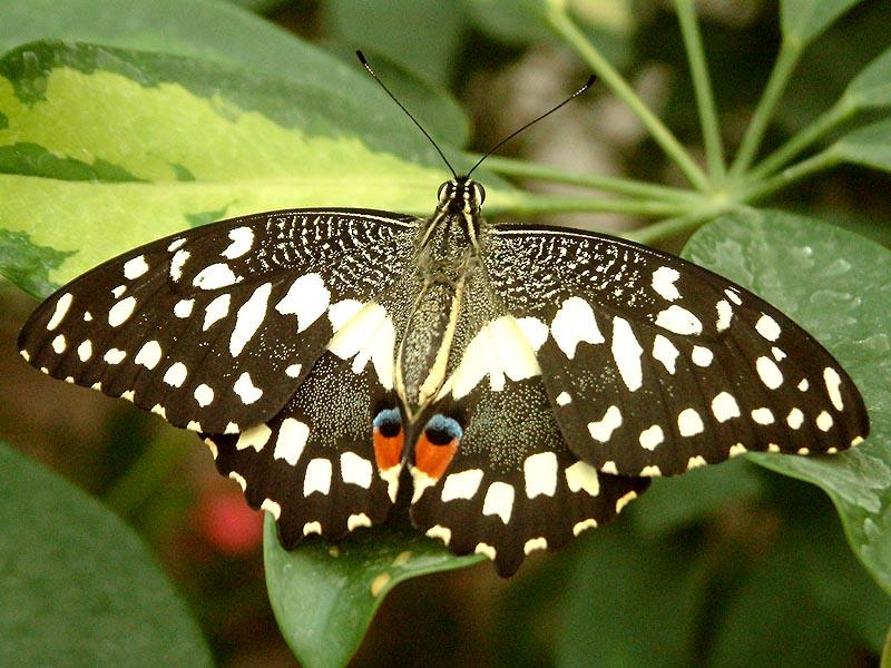 Schmetterlingshaus Jonsorf Sachsen 11