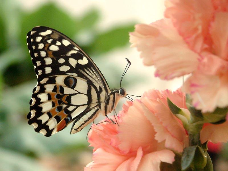 Schmetterlingshaus Jonsorf Sachsen 14