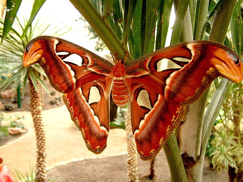 Schmetterlingshaus Jonsorf Sachsen 15