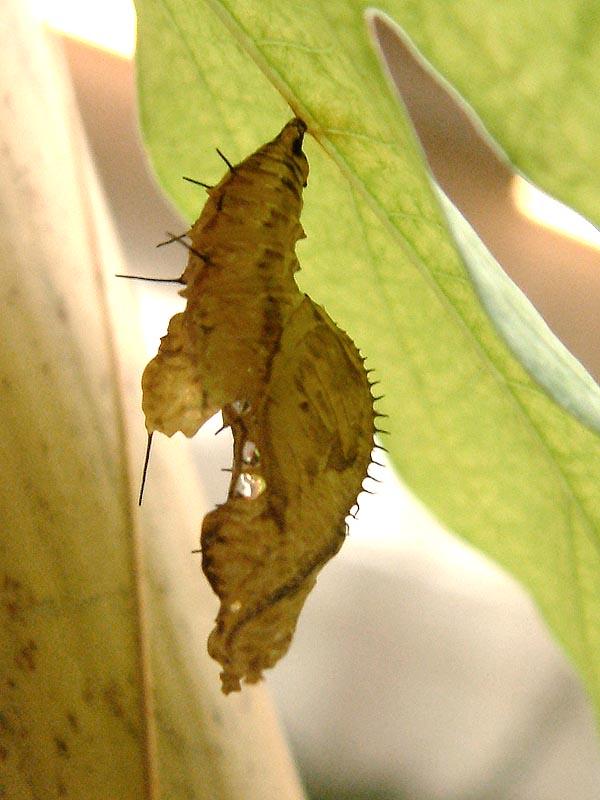 Schmetterlingshaus Jonsorf Sachsen 2