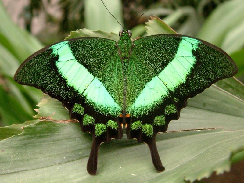 Schmetterlingshaus Jonsorf Sachsen 7