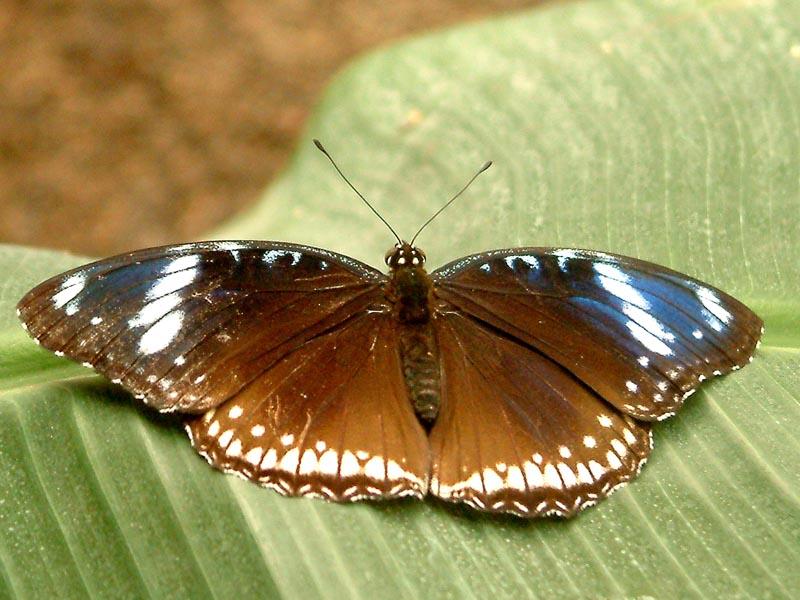 Schmetterlingshaus Jonsorf Sachsen Eierfliege