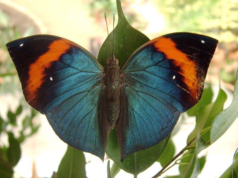 Schmetterlingshaus Jonsorf Sachsen Ind Blatt