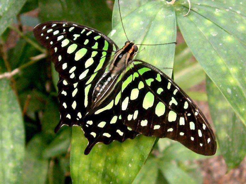 Schmetterlingshaus Jonsorf Sachsen Kolibri